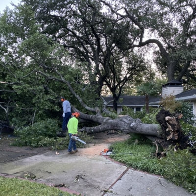 A fallen tree in Dallas, TX after the tornado hit in October of 2019. The root system was completely uprooted and we had to slice up the trunk and haul it away