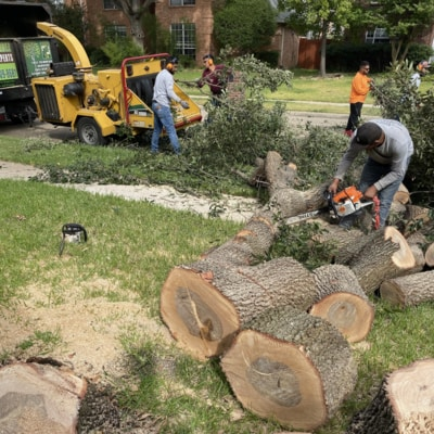 Workers cutting up a stump in Plano