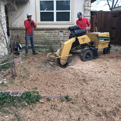 Our guys actively grinding down a stump close to a home. There are wood shavings on the ground